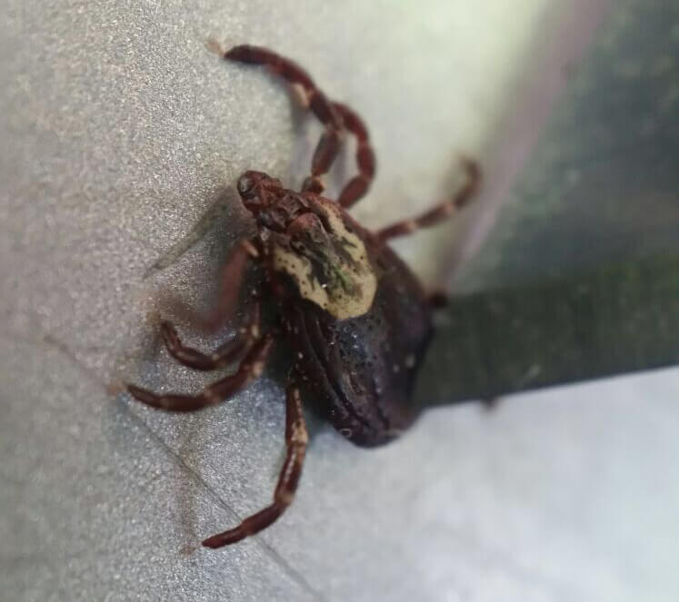 tick control services in Baltimore